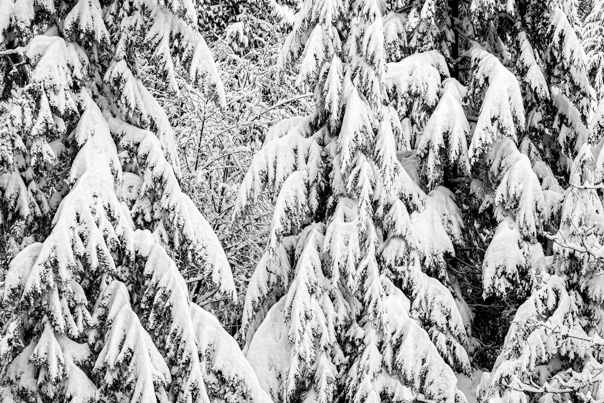 Snowy Textures