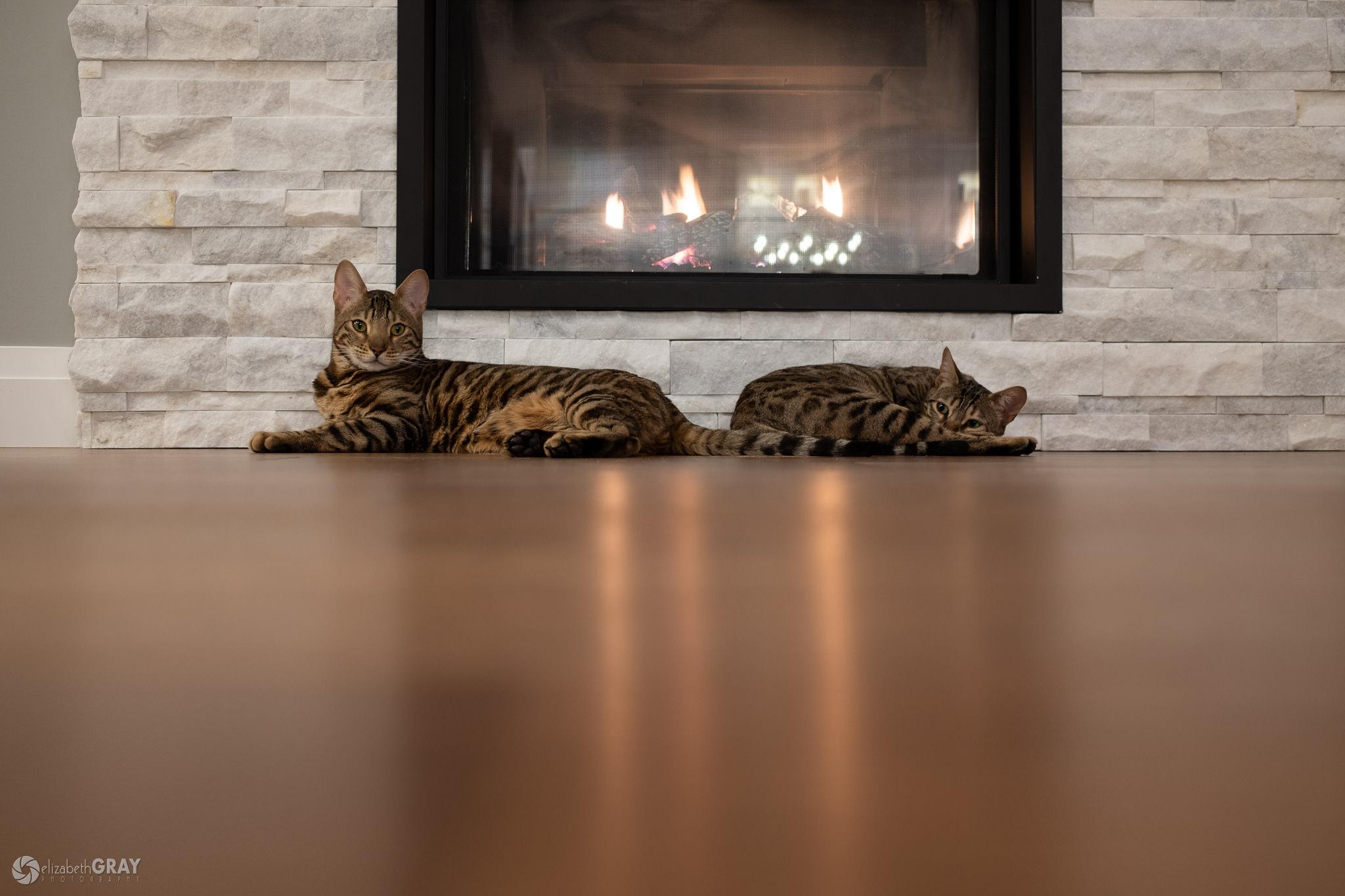 A Warm Furry Fire