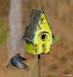 Blue Bird 1 - The Approach