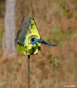 Blue Bird 2 - Leaving Home