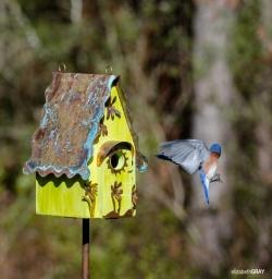 Blue Bird 4 - Oops, I Forgot my Keys