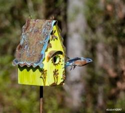 Blue Bird 6 - I'm Late!