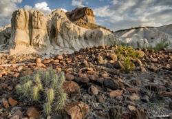 Big Bend Rock and Cactus