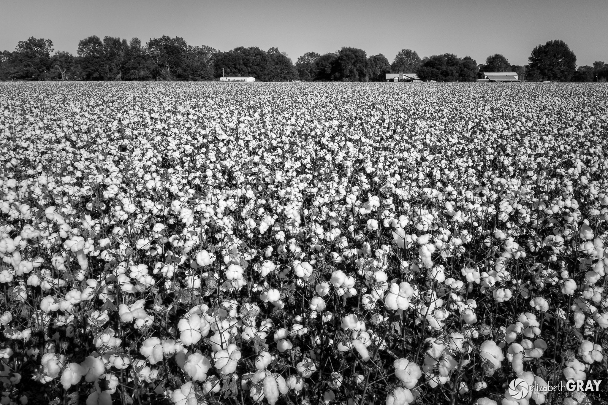 Image result for cotton fields black and white