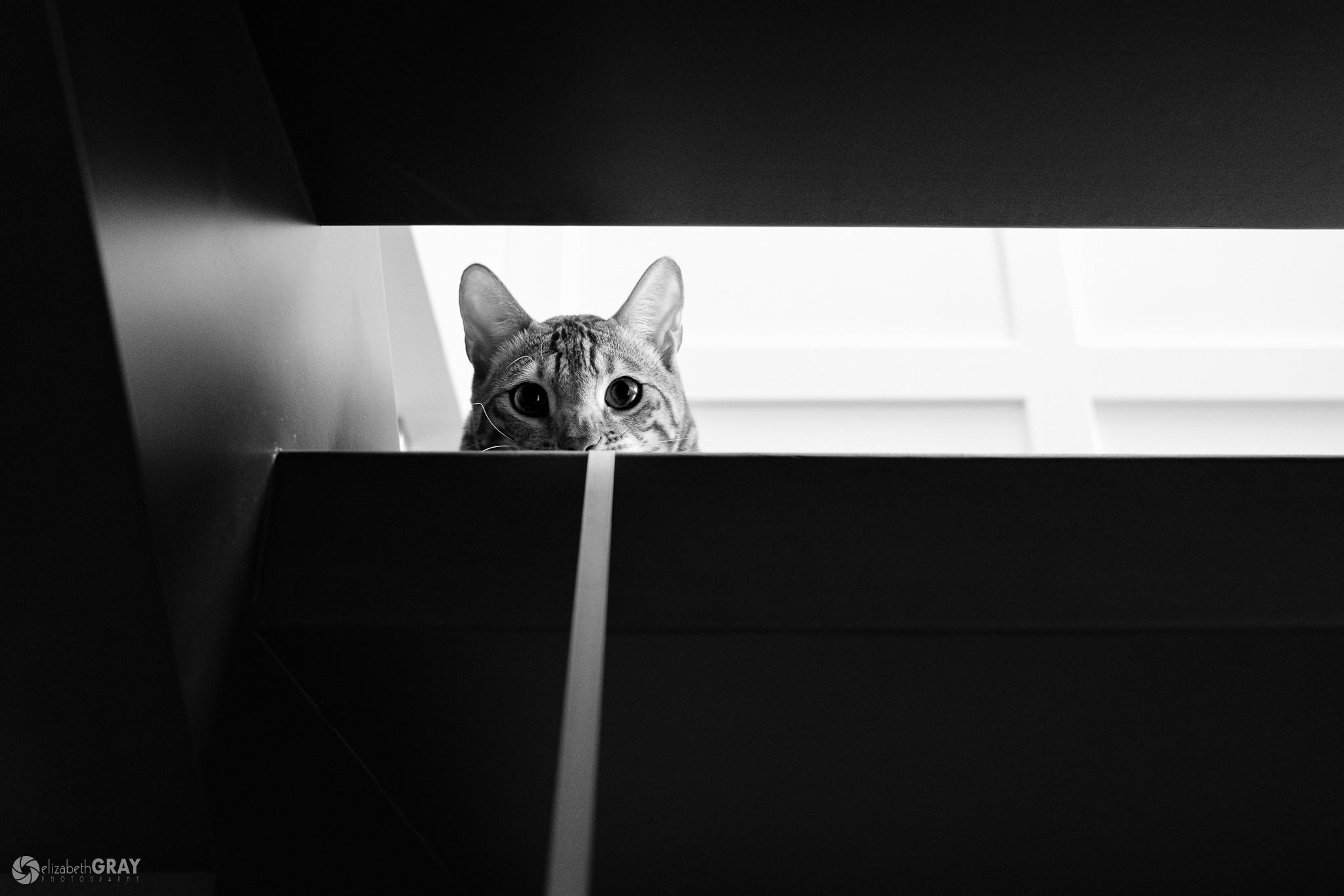 Aslan Peeking