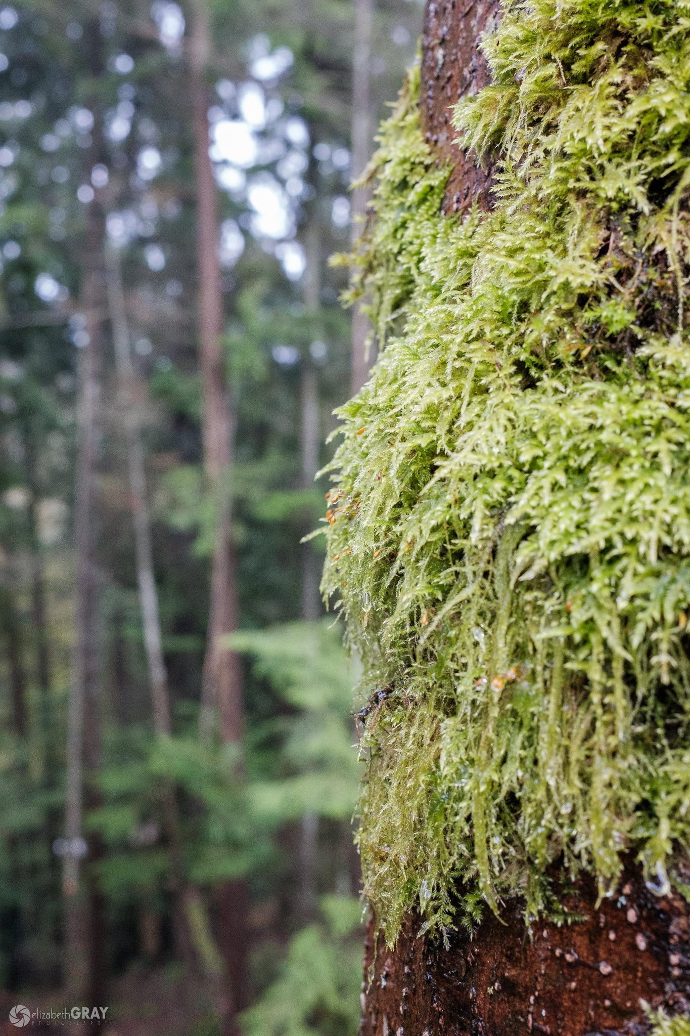 Wet Moss