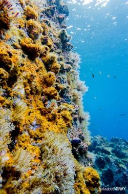 Undersea Wall