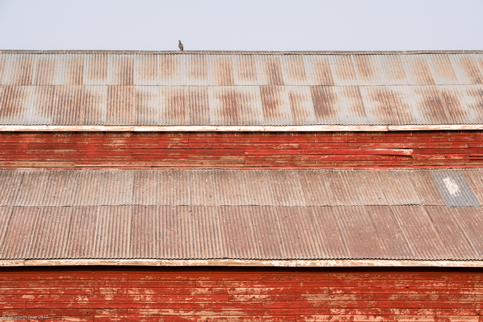 Red Barn and Bird