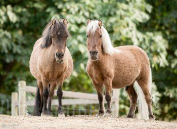 Saltspring Horses