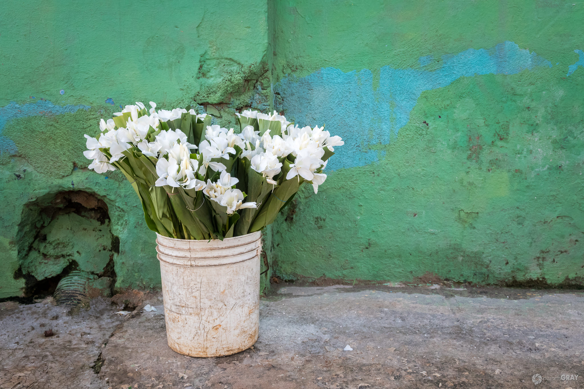 Pail of Flowers