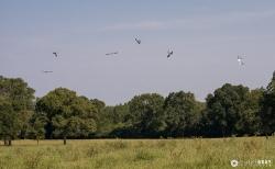Six birds dance over the field