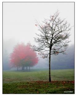 Lafarge Lake Fog