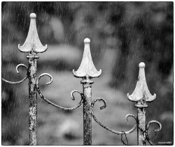 Rainy Day Garden Gate