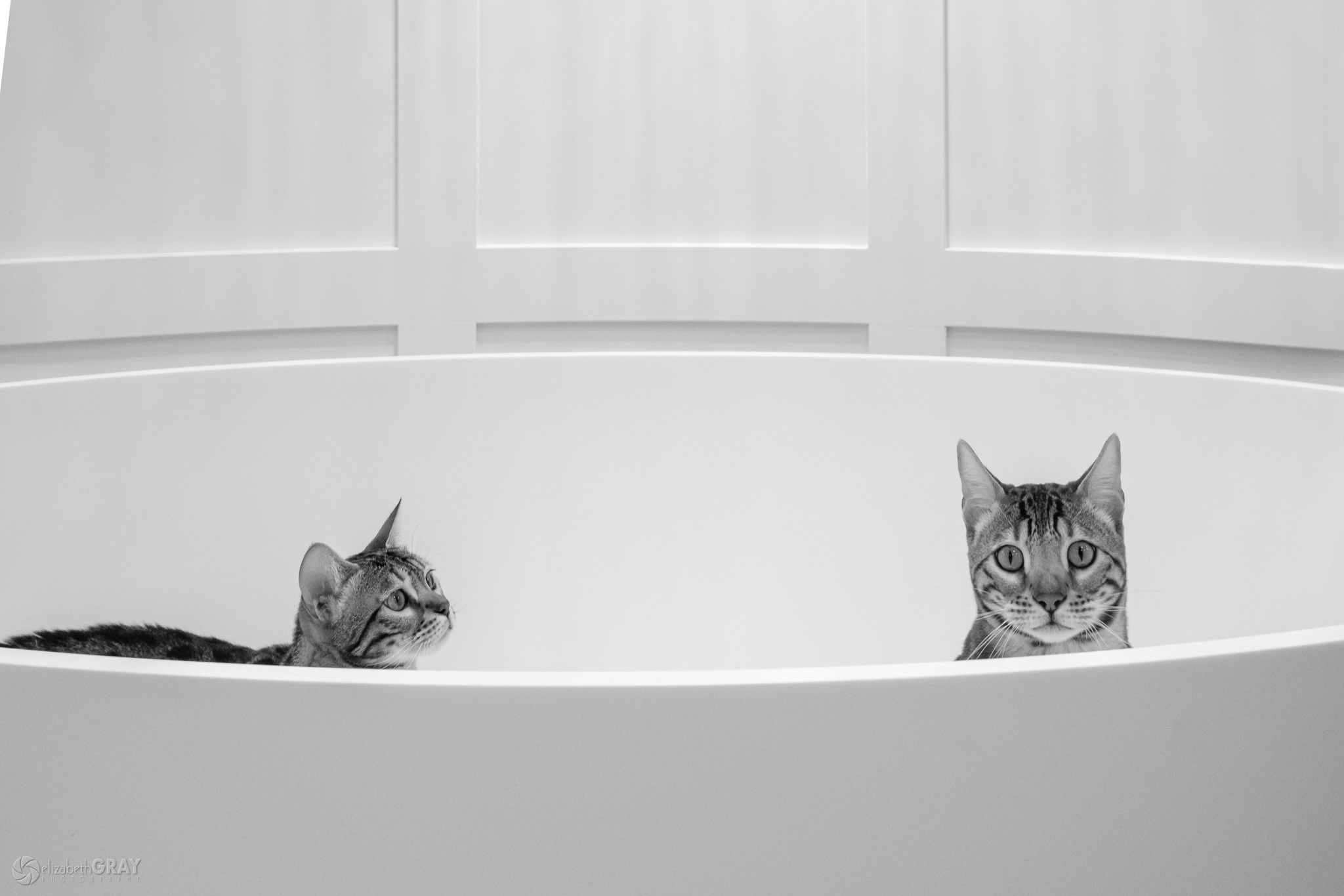 Rub a Dub Dub Two Cats in a Tub