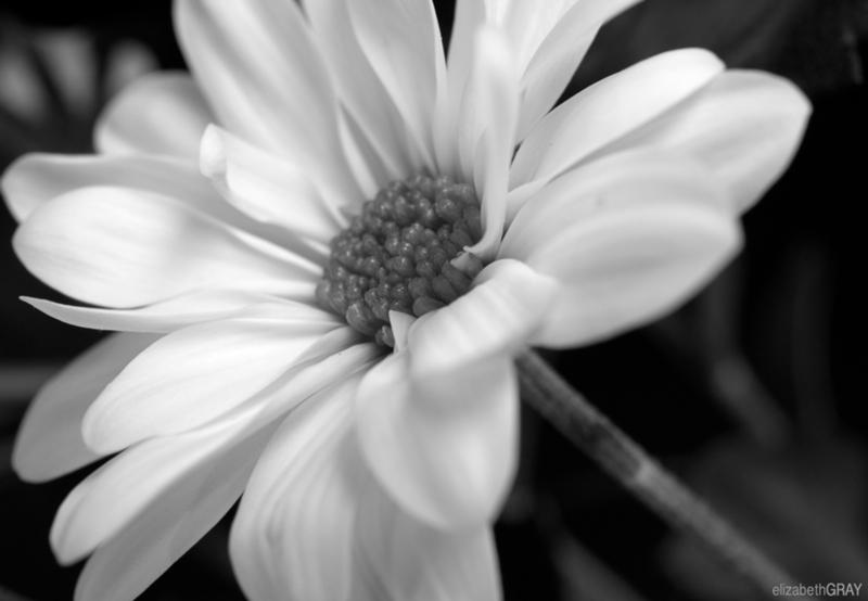 Spring Flowers – April 2012